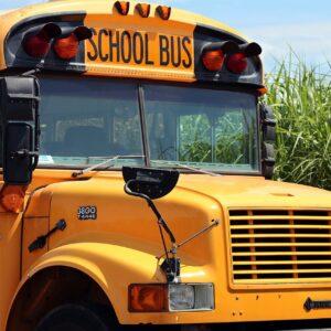 school bus, school, bus